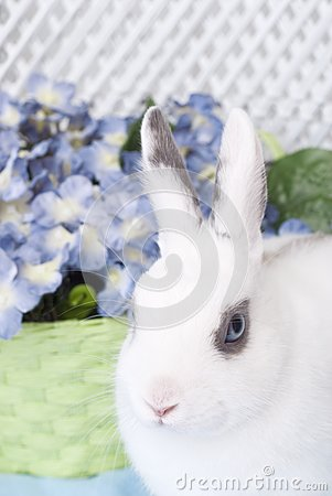 White Rabbit with Green Basket and Flowers