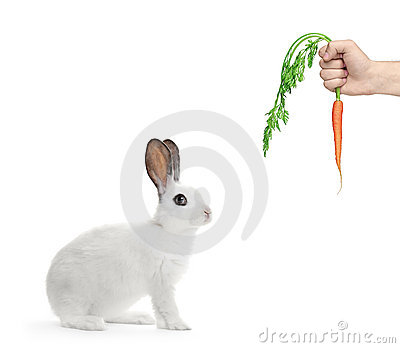 A white rabbit and a hand holding a carrot