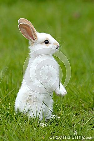 Free White Rabbit On The Grass Stock Photos - 1747633