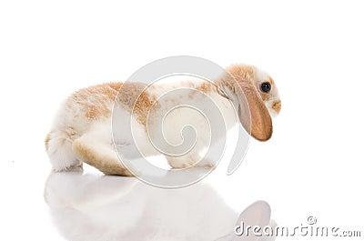 White rabbit,shoot in the studio