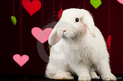 White rabbit with valentines. Easter rabbit