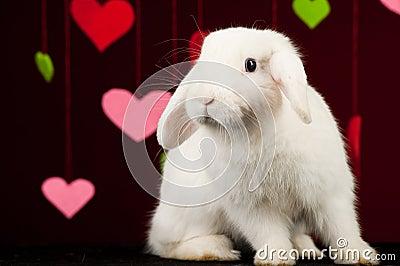 White rabbit with valentines. Easter rabbit