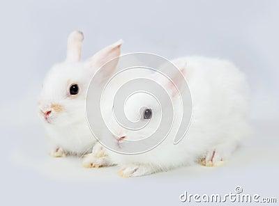 White rabbits on grey