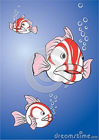 White-red fish