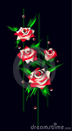 white and red Roses on balck background