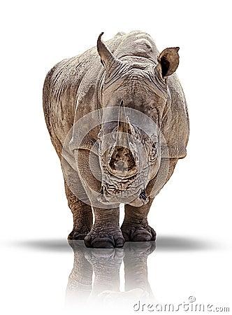 Free White Rhino Stock Photos - 27988293