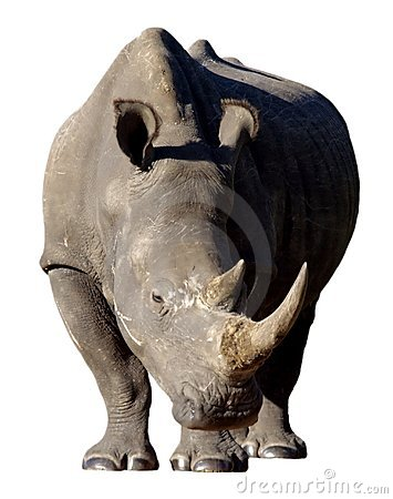 White Rhino Isolated