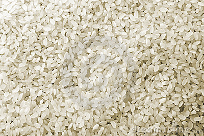 White Rice Crop Texture
