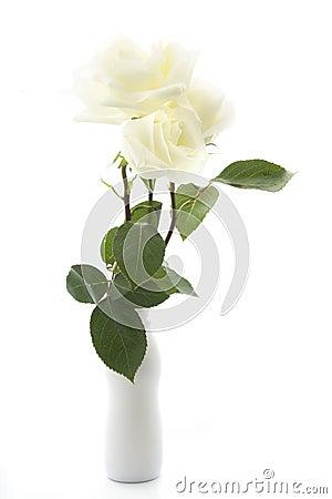 Free White Rose Stock Photography - 9831022