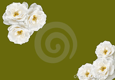 White rose bouquet background