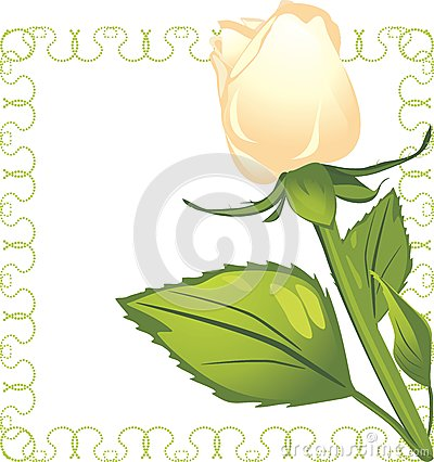 White rose in the decorative frame