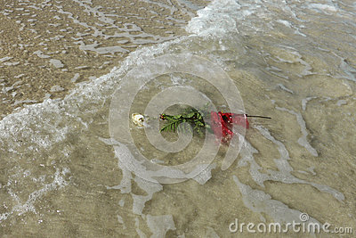White rose floating in sea sand