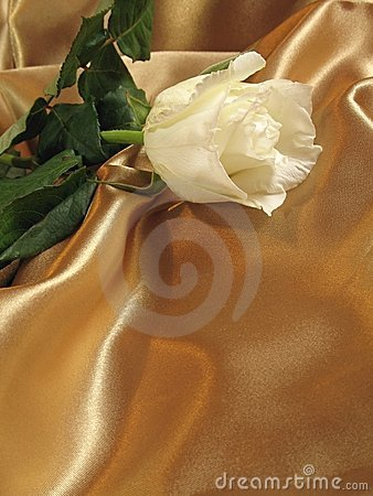 Free White Rose On Gold Satin Stock Photos - 1726303
