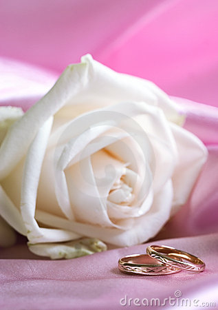 White rose and wedding rings