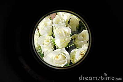White roses in circular frame