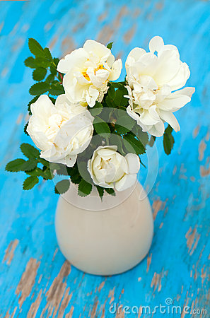 White roses in vase on blue wooden background