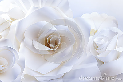 White roses on white background.