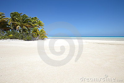 White sand beach and palm tree on blue lagoon