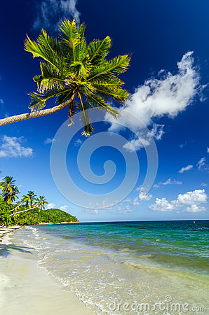 White Sand and Palm Tree