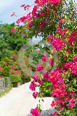 White sand street in Taketomi Island, Okinawa, Japan Stock Photo