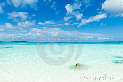 White sand tropical beach, clear blue coral water