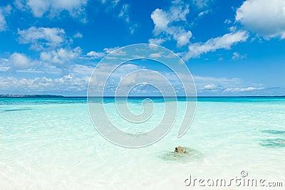 White sand tropical beach, clear blue coral water