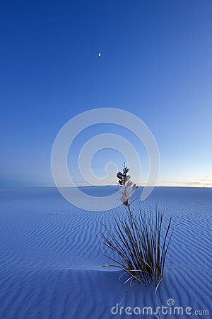 White Sands at Night