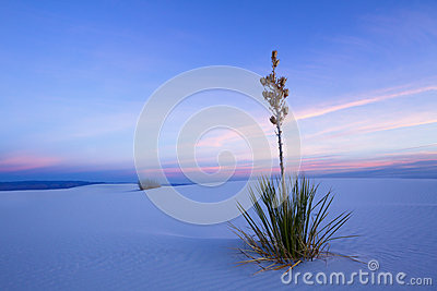 White Sands in Twilight