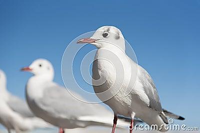 White Seagull birds in eye focusing