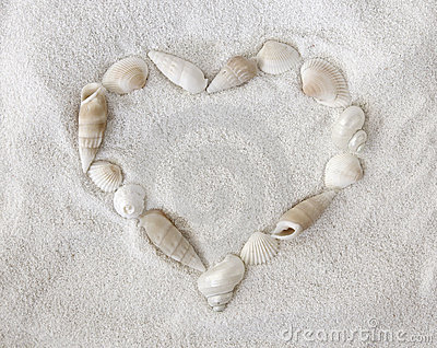 White seashells on white sand