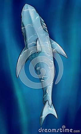 White shark underwater