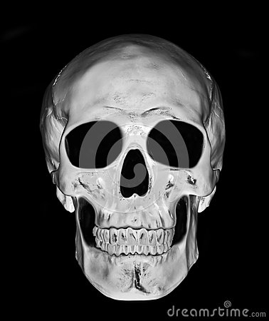 Free White Skull Royalty Free Stock Photo - 36181405