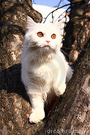 White small cat