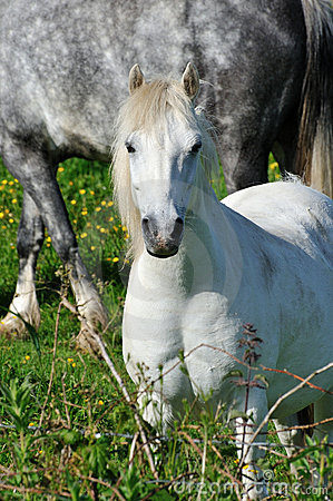 White small pony on a sunny day