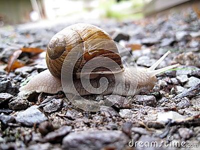 White snail on little rocks