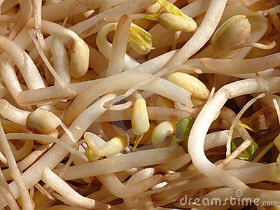 White soy bean sprouts