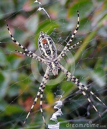 Free White Spider In His Web Stock Images - 95643314