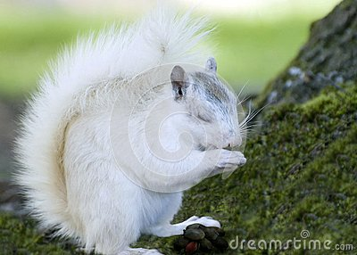 White Squirrel and Food