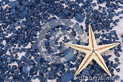 White starfish on black rocks