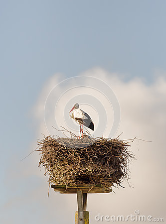 Free White Stork Stock Photo - 39470880