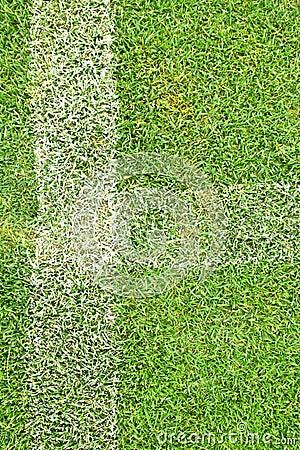 White stripe on the green grass