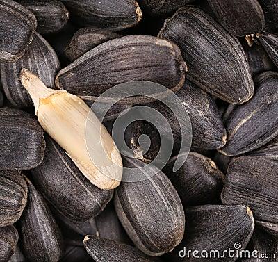 White sunflower seed on black seeds.