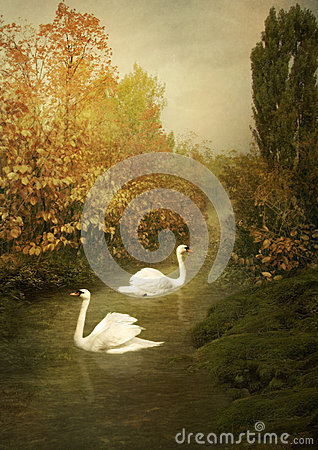 Free White Swans Royalty Free Stock Photos - 61413968