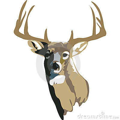 White Tailed Deer with clipping path