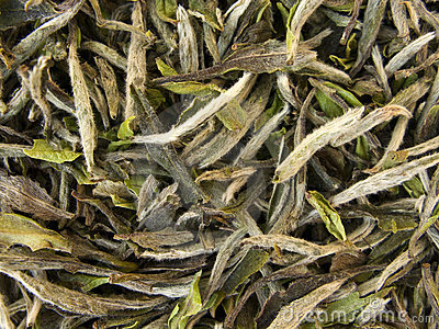 White Tea - Bai Mu Tan