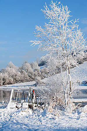 White tree and river