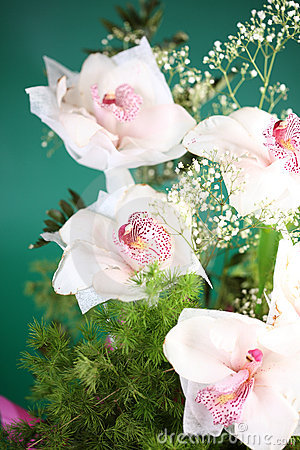 White tropical orchids