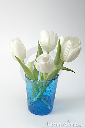 White Tulips in Blue Glass