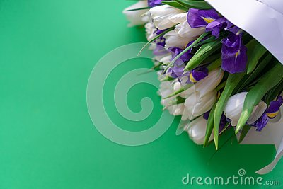 White tulips and purple irises on a green background Stock Photo