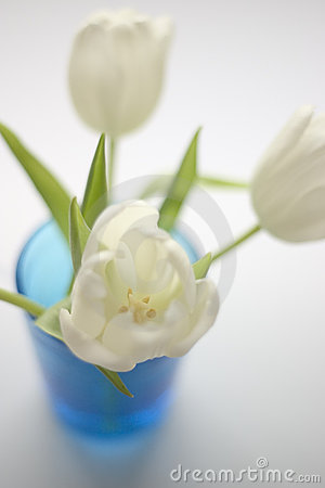 White Tulips Shallow Depth